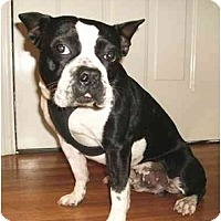 Adopt A Pet :: Dozier - Mooy, AL