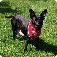 Adopt A Pet :: Macie - Marlton, NJ