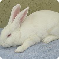 Adopt A Pet :: Wilson - Bonita, CA