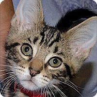Adopt A Pet :: Benjamin - Medina, OH