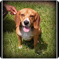 Adopt A Pet :: Bandit - Indian Trail, NC