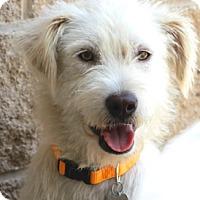 Adopt A Pet :: Rankin - Norwalk, CT
