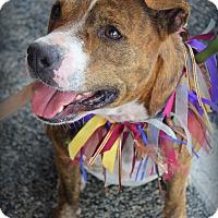 Adopt A Pet :: Harmony - Groveland, FL