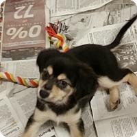 Adopt A Pet :: Little Boy 2 - Pomerene, AZ