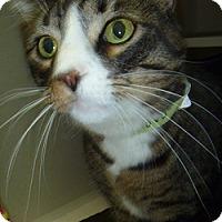 Adopt A Pet :: Caruso - Hamburg, NY