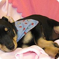 Adopt A Pet :: Rondi - Charlemont, MA