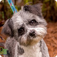 Adopt A Pet :: Betsy - Savannah, GA