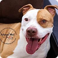 Adopt A Pet :: Patch - Apache Junction, AZ