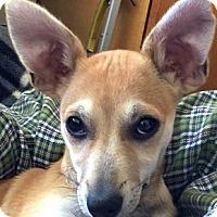 Adopt A Pet :: Perry - Oakland, CA