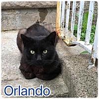 Adopt A Pet :: Orlando - Wayne, NJ