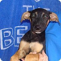 Adopt A Pet :: Karma - Oviedo, FL
