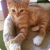 Adopt A Pet :: Baggy - Leonardtown, MD