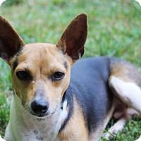 Adopt A Pet :: Finley (VA) - Virginia Beach, VA