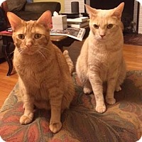 Adopt A Pet :: Donte (with Dexter) - Fairfax, VA
