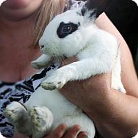 Adopt A Pet :: Dean - Maple Shade, NJ