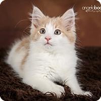 Adopt A Pet :: Scout - Eagan, MN