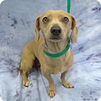 Adopt A Pet :: Bobbie Rae - Pico Rivera, CA