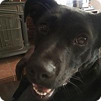Adopt A Pet :: Lulu - Stillwater, OK