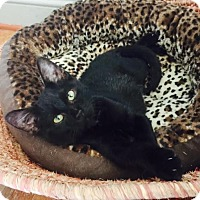 Adopt A Pet :: PEPPER - Burlington, NC