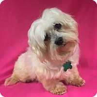 Adopt A Pet :: Gina - La Verne, CA