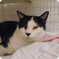 Adopt A Pet :: Milton - Chambersburg, PA