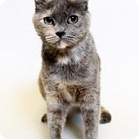 Adopt A Pet :: Rebecca - Truckee, CA