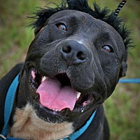 Adopt A Pet :: Radar - Hazlehurst, GA