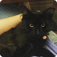 Adopt A Pet :: Zippy - Gainesville, FL