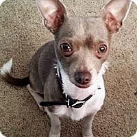 Adopt A Pet :: Remy - Green Bay, WI
