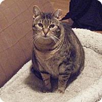 Adopt A Pet :: Savannah - Kensington, MD