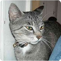 Adopt A Pet :: Layla - Irvine, CA