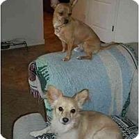 Adopt A Pet :: Buddy & Brownie - Gilbert, AZ