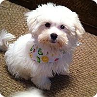 Adopt A Pet :: *Marty - PENDING - Westport, CT