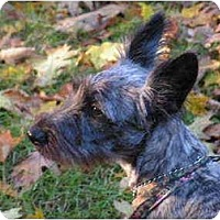 Adopt A Pet :: Dahlia - Rigaud, QC