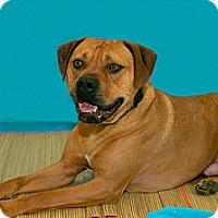 Adopt A Pet :: Trego - Lima, OH