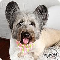 Adopt A Pet :: Ella - Omaha, NE