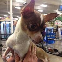 Adopt A Pet :: Reed - Fresno, CA
