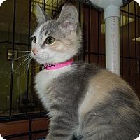 Adopt A Pet :: Rona - Medina, OH