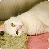 Adopt A Pet :: Rascal - Peacedale, RI
