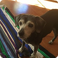 Adopt A Pet :: Camille - Huntsville, AL