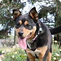 Adopt A Pet :: Maddy - Madera, CA
