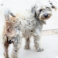 Adopt A Pet :: Camfield - meet him!! - Woonsocket, RI