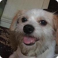 Adopt A Pet :: Madan - Rocky Mount, NC