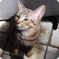 Adopt A Pet :: Copper - N. Billerica, MA