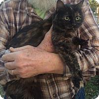 Adopt A Pet :: Sasha - Slidell, LA