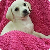 Adopt A Pet :: AF4 - Orland Park, IL