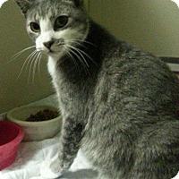 Adopt A Pet :: 33835246 - Cedartown, GA