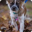 Adopt A Pet :: Pistachio: Adoption Pending