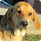 Adopt A Pet :: Jenny