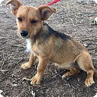 Adopt A Pet :: Tia - Mesa, AZ
